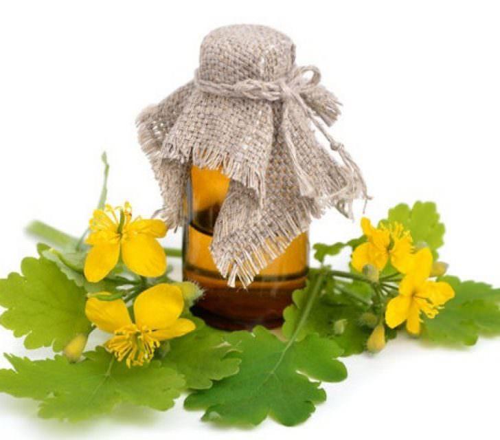 Чистотел при псориазе – как правильно применять? Масло чистотела для избавления от псориаза